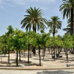 Las 4 plazas más populares de Jerez